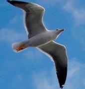 Plum's® Soaring Bird